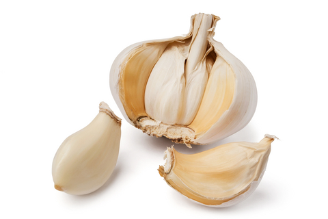 Using garlic as an antibiotic