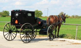 "Allergies Almost ""Non Existent"" in Amish Children"
